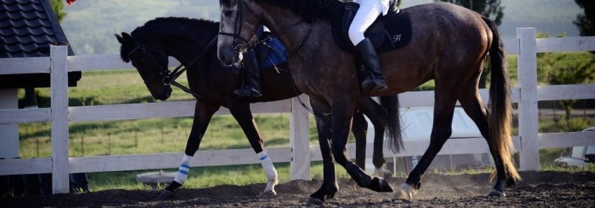 Equester, Voinești, Iași