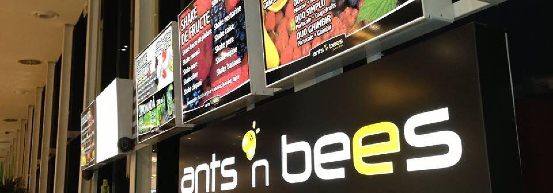 Ants n Bees, Iași
